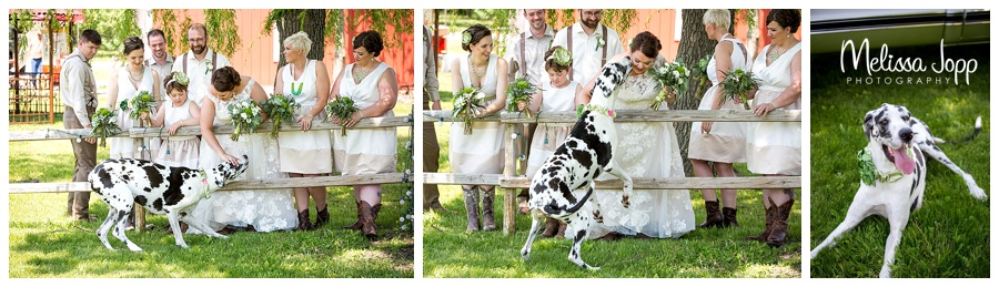 wedding pictures with dog mn